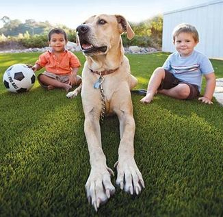 Pet Friendly Synthetic Turf
