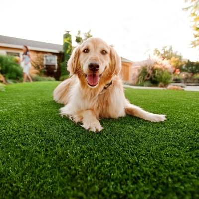 Artificial Turf Inland Empire, Corona, Pet Turf For Dogs
